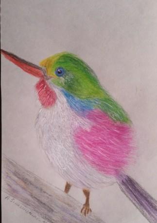 bird (571 x 814)