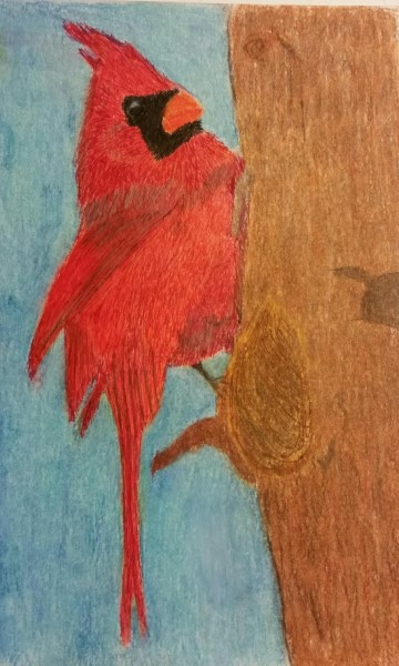 Bird in colorpencil