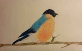 Bird in colorpencil_renamed_4542