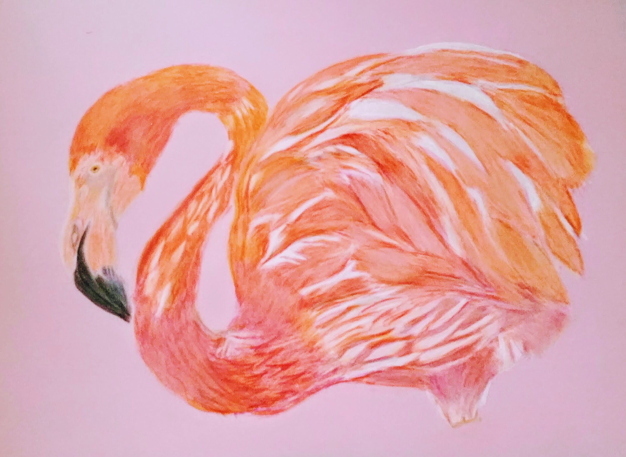 flamingo updated