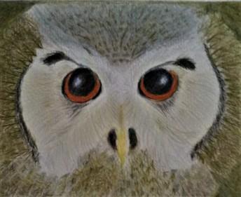 Owl eyes (3)