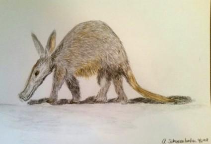 Anteater (600 x 408)