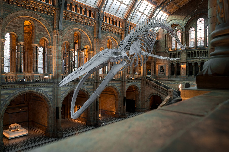 national-history-museum-4314035_960_720